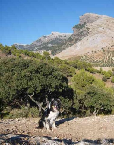 Mac enjoying the scenery in Cazorla Natural Park, Southern Spain.