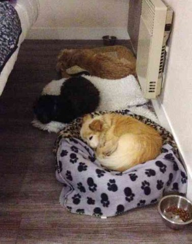 3 in a row! Poquito, Nell & Pooky, all asleep in front of the radiator - on a chilly night - in the French hotel, on their way from Spain to the UK.