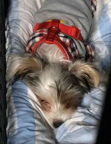 Little Chavito, sleeping peacefully in his cage, on his journey from Gillingham in Kent to Logroño in Spain.